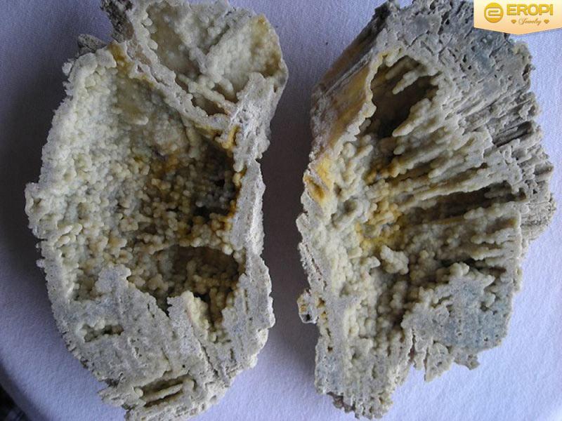 Mã não hình thành trong gỗ hóa thạch